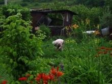 Свой огород - самый надежный путь к качественным овощам
